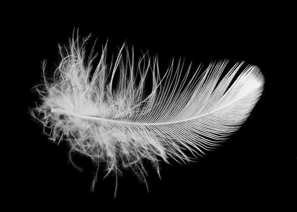 Feather Studies