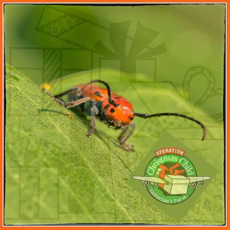 Red Bug's Christmas
