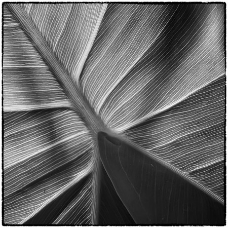 Leaf Abstracts and Manipulations